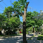 Public Trees at 19 Abbottsford Rd