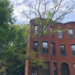 Public Trees at 114 Brook St