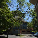 Public Trees at 12 Thorndike St
