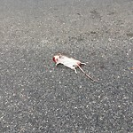 Dead Animals at 2 Summit Ave
