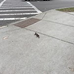Dead Animals at Amory St